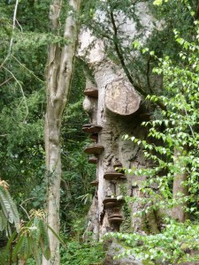minterne tree (2)